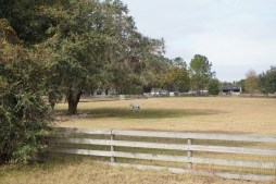 Horse grazing in the Brooksville countryside